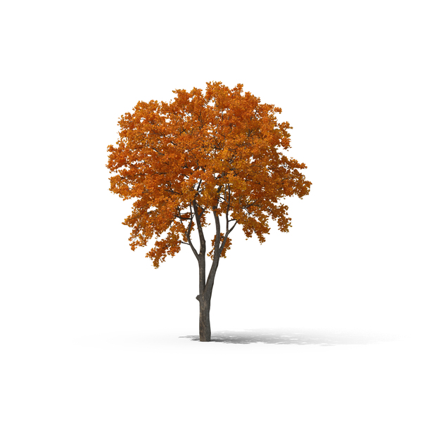 Deciduous Trees Collection PNG Images & PSDs for Download.