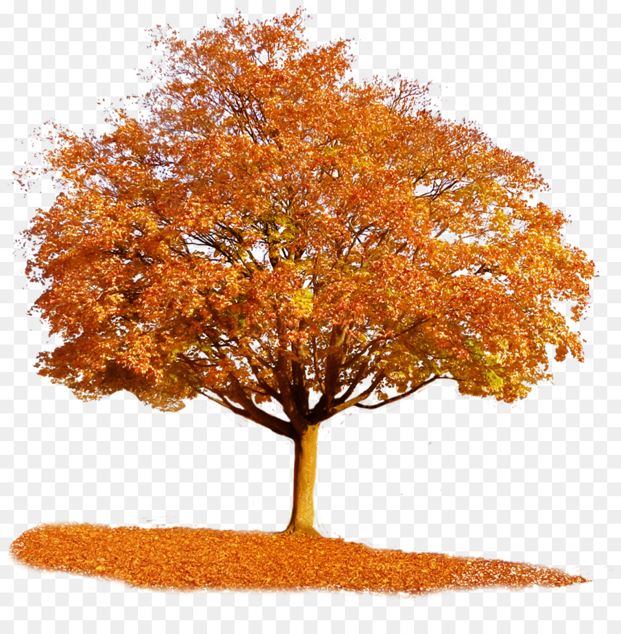 Autumn Background png download.