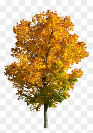 Fall trees clipart tree autumn free transparent png.