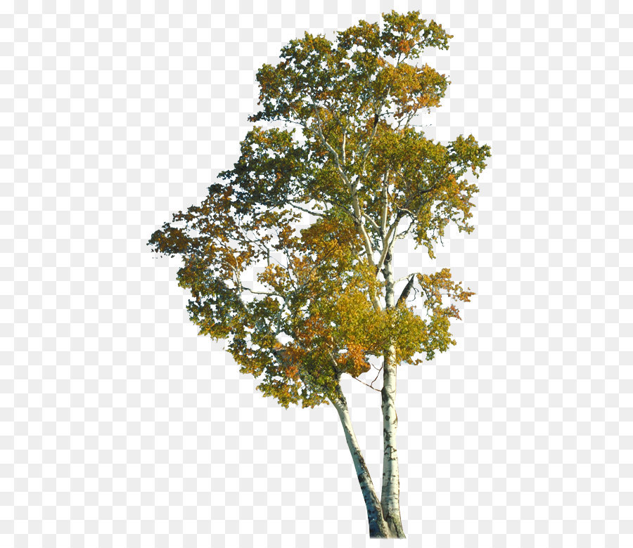 Download Free png Tree Autumn Branch Trunk Autumn trees png.