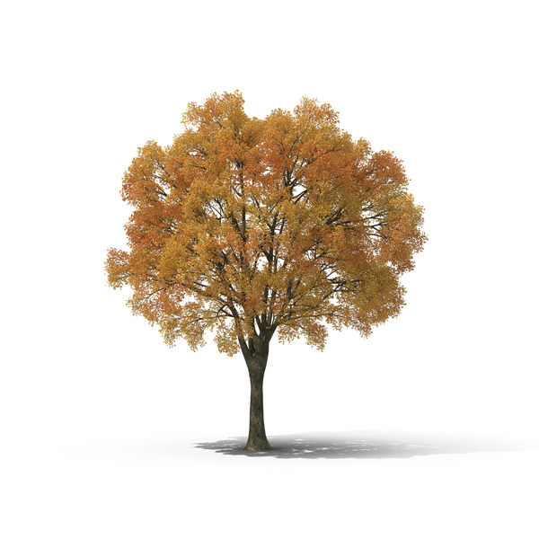 Autumn Tree PNG Images & PSDs for Download.