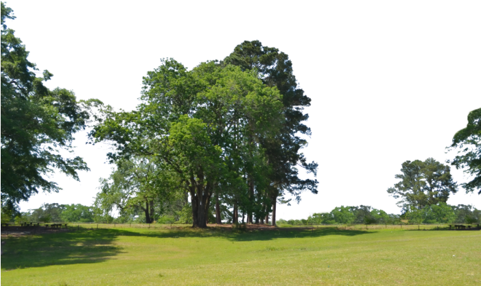 HD Background Trees Png.