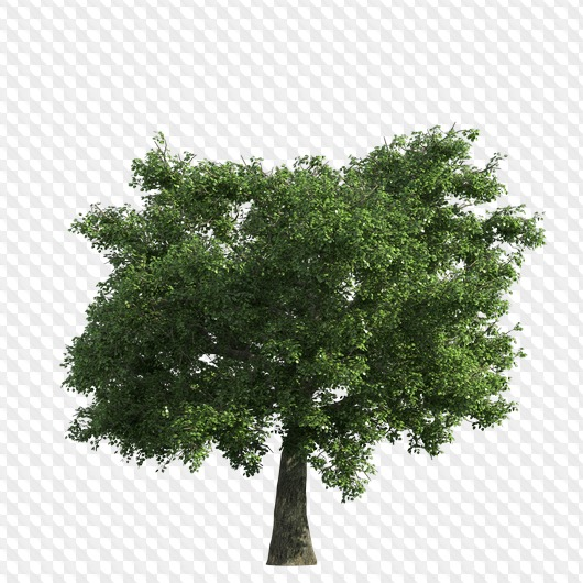 100 PNG, A large set for design, Trees in PNG on a.