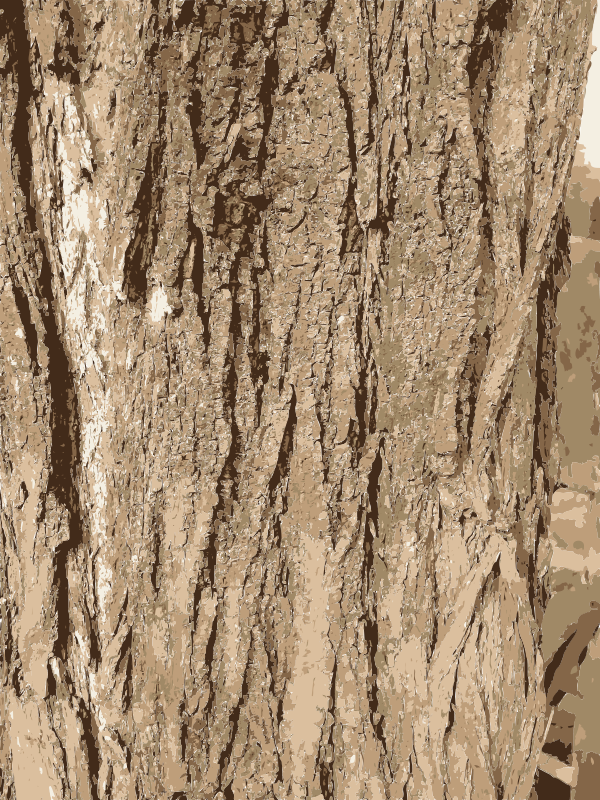 Free Clipart: Tree bark texture.
