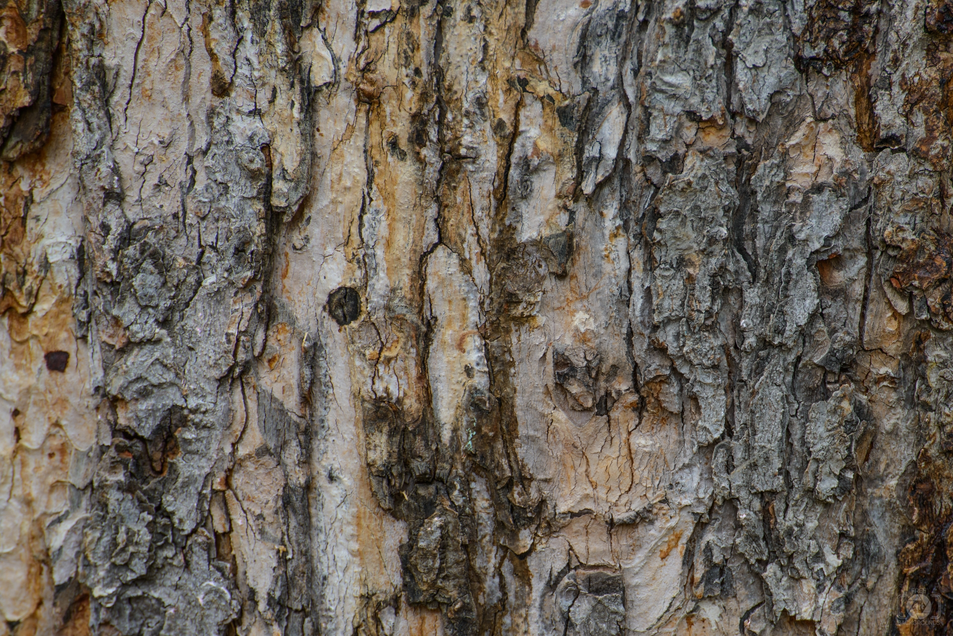 Tree Bark Background.