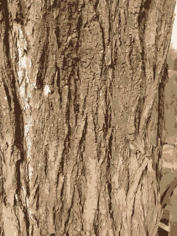 Free Clipart: Tree bark texture.