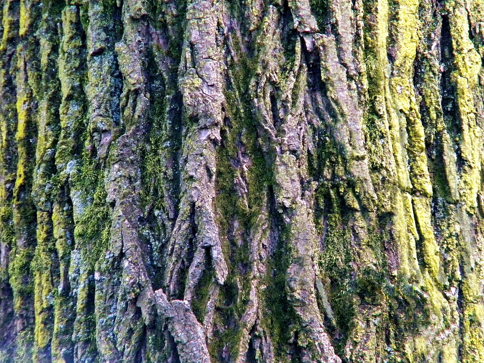 Tree Bark Clip Art Public Domain Clip Art Photos and Images.
