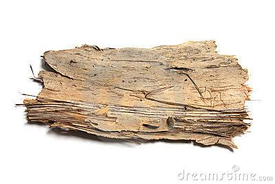 Clipart tree bark.
