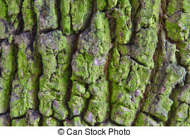 Tree bark Stock Illustrations. 6,705 Tree bark clip art images and.