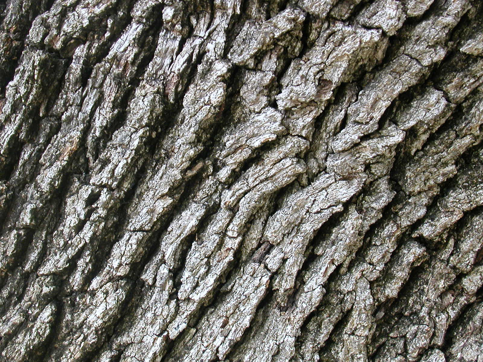 Tree Bark Clipart.