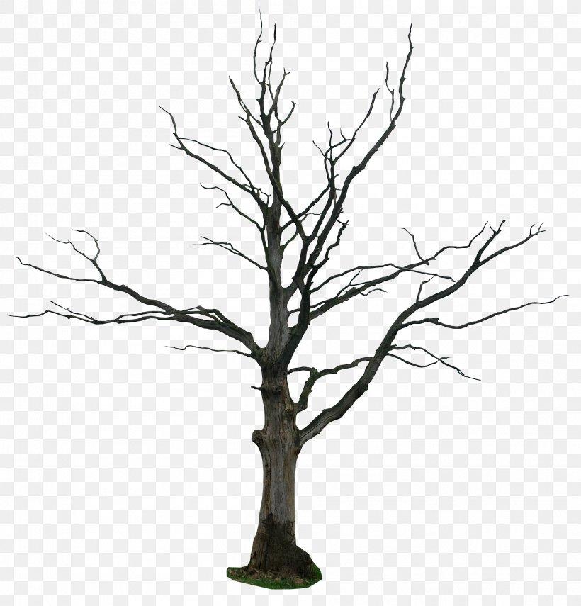 Tree Drawing Snag Clip Art, PNG, 1992x2079px, Tree, Bark.