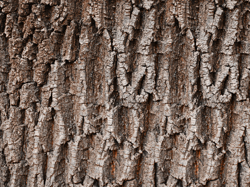 Tree Bark Texture For Photoshop (Nature.