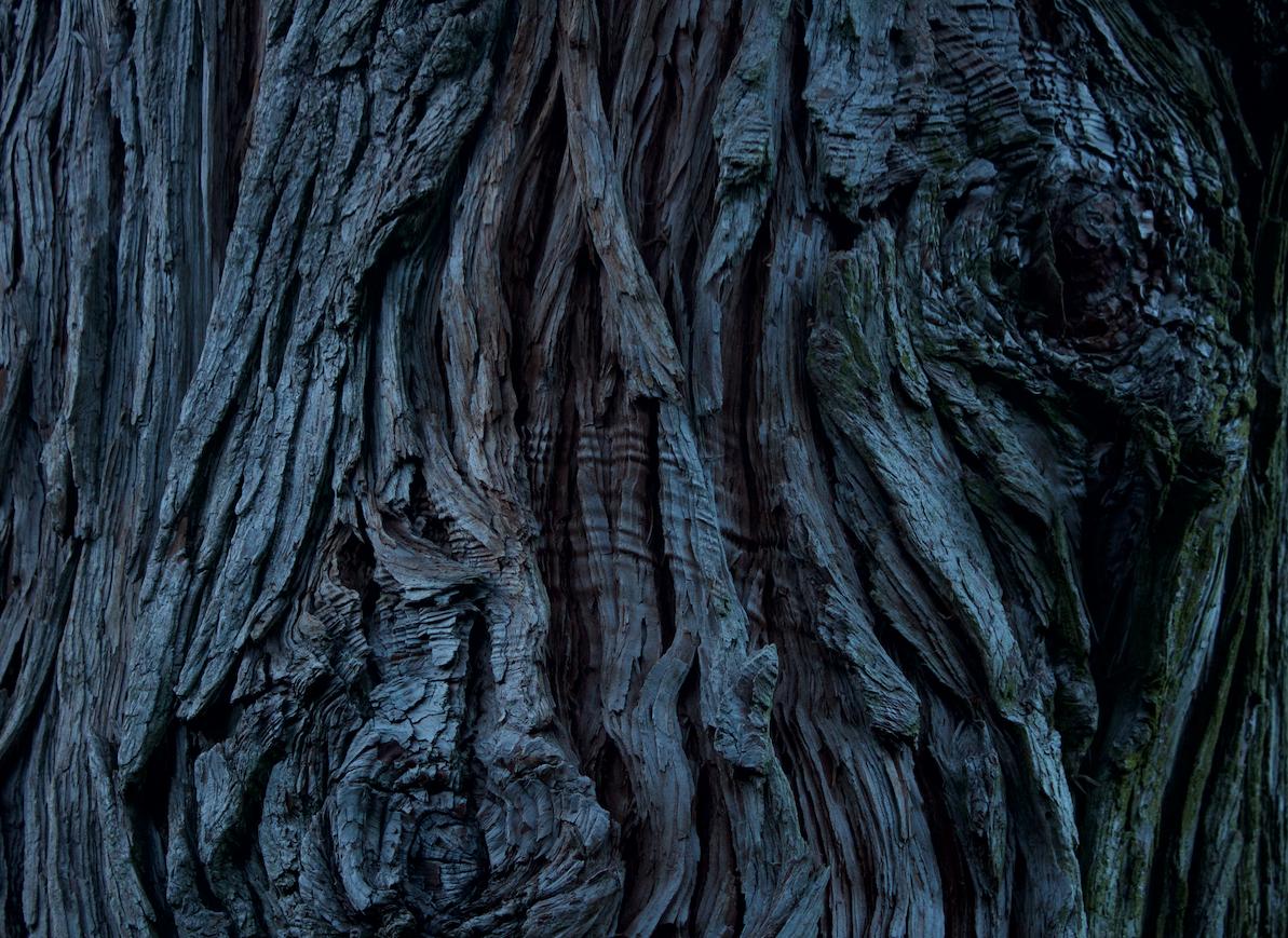File:CEDAR TREE BARK.png.