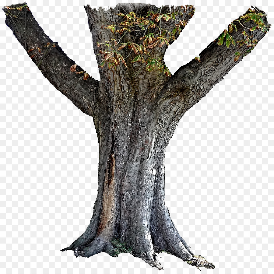 Bark Tree Png & Free Bark Tree.png Transparent Images #11878.