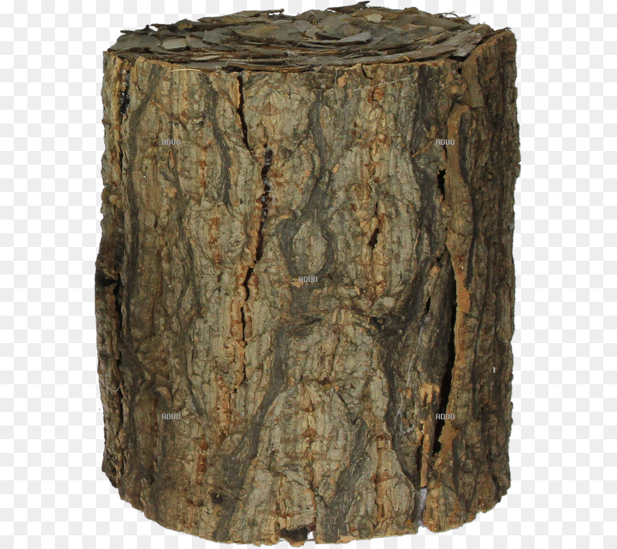 Birch Tree png download.