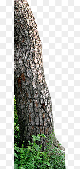 Download Free png Tree Bark Png, Vectors, PSD, and Clipart.