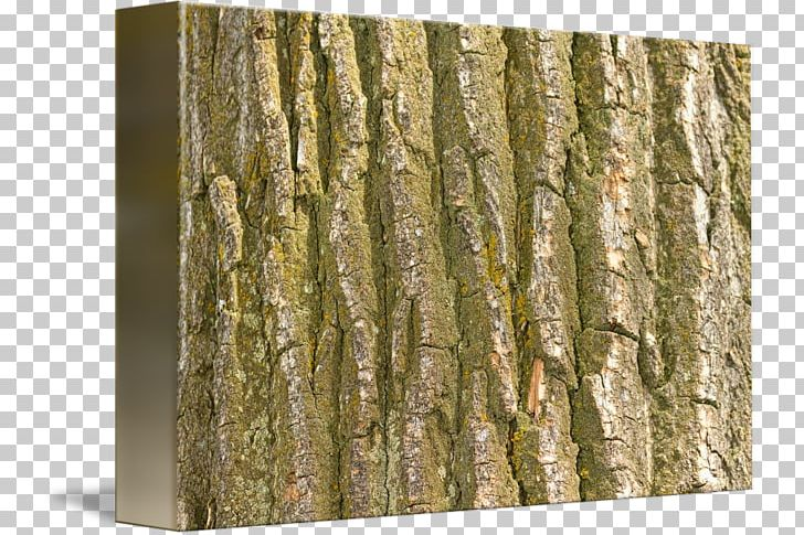 Trunk Wood /m/083vt Birch Bark PNG, Clipart, Bark, Birch.