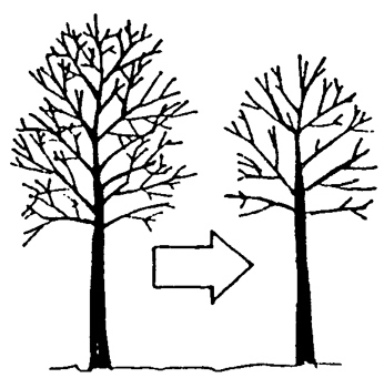 NMSU: Tree Pruning Techniques.