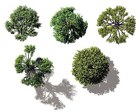 Architectural Trees Birds Eye View.