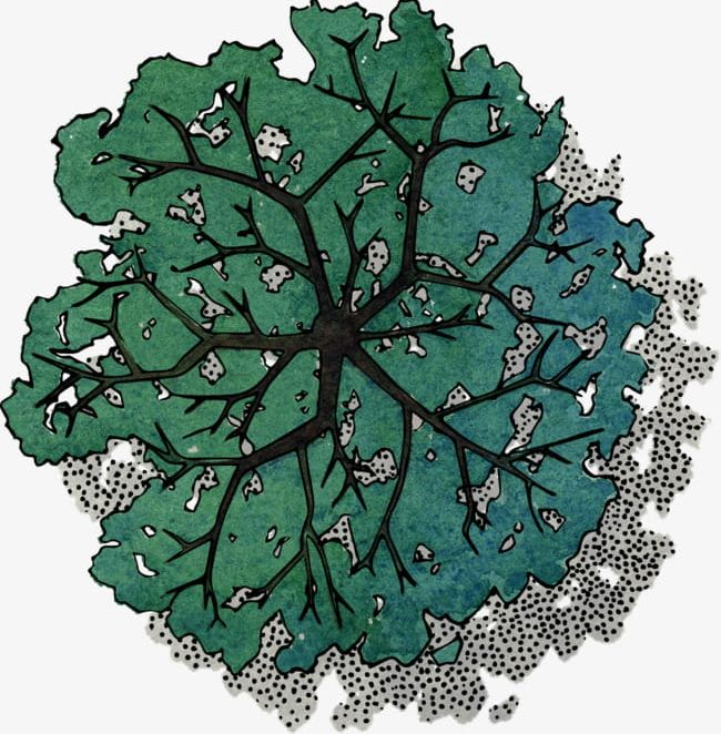 Green Tree Top View PNG, Clipart, Birdseye View, Color.
