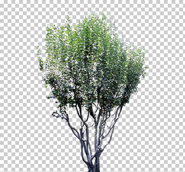 Twig Tree Garden Shrub Bird\'s.