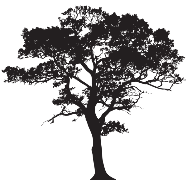 Oak Africa Tree Clipart Black And White.