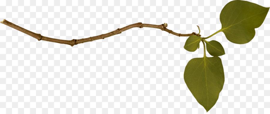 Leaf Branch png download.
