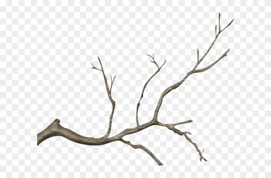 Jpg Free Stock Branch Transparent Tree Limb.