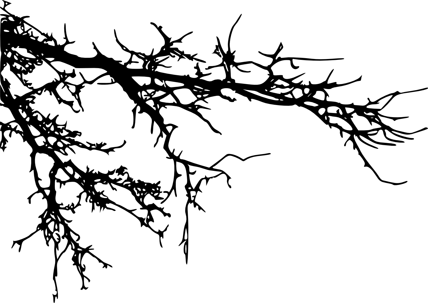Branch Tree Silhouette Clip art.