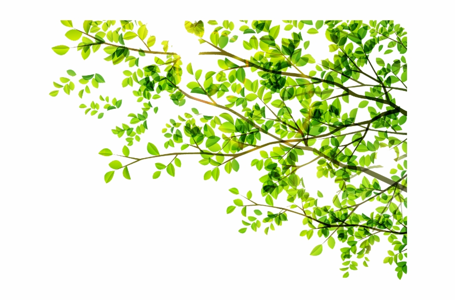 leaves #leaf #green #tree #vector #freetoedit.