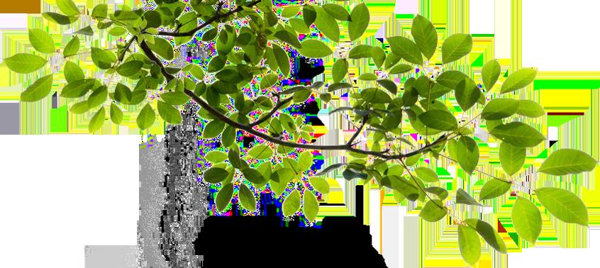 Tree Limb PNG Transparent Tree Limb.PNG Images..