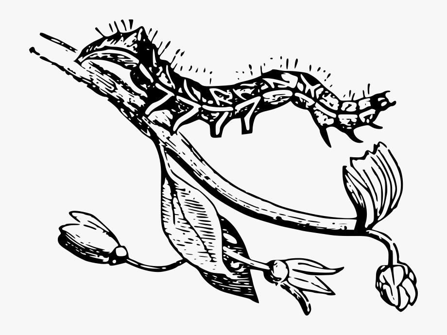 Caterpillar On A Branch.