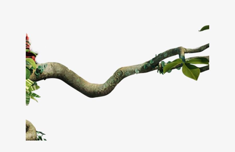 Branch Clipart Jungle Tree Branch.