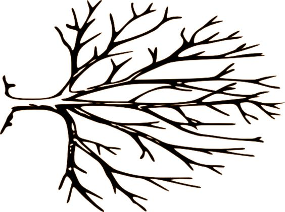 Tree branches clipart.