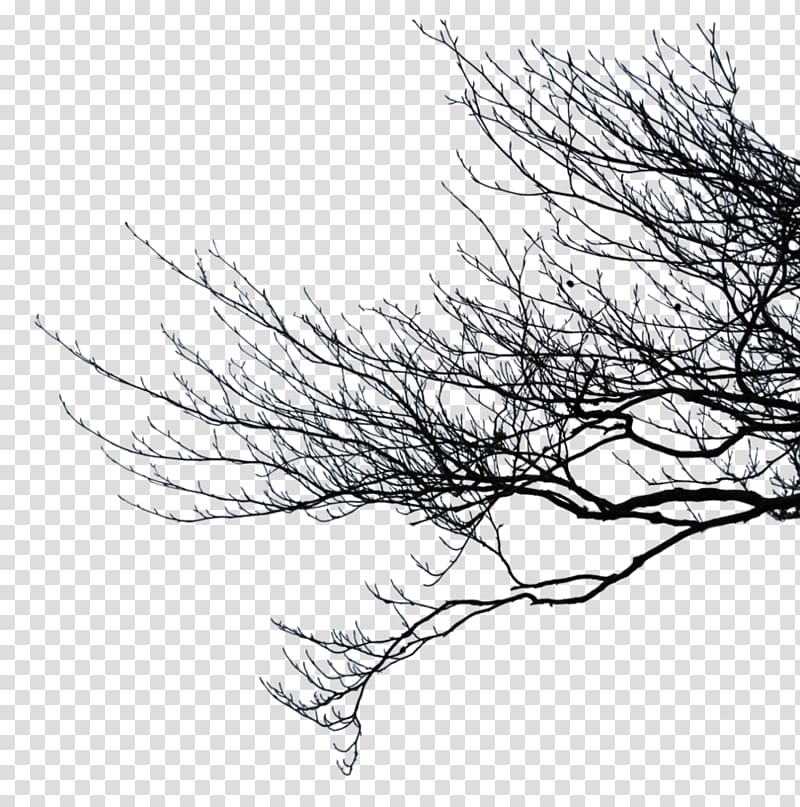 Branch Tree , branches transparent background PNG clipart.