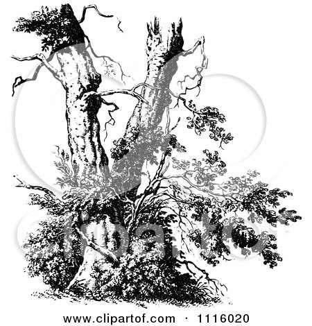 Clipart Retro Vintage Black And White Broken Tree.