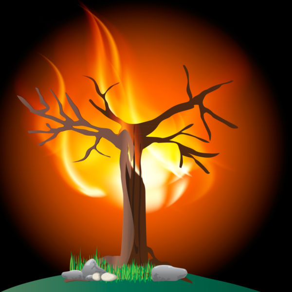 Burning tree clip art.