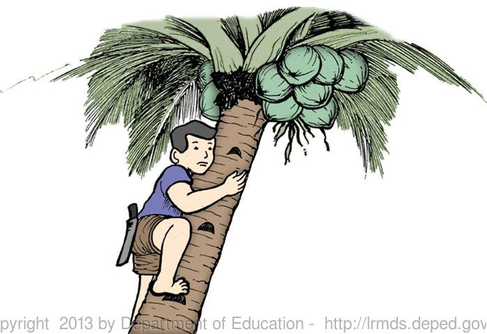 Coconut Tree Climber Clipart.
