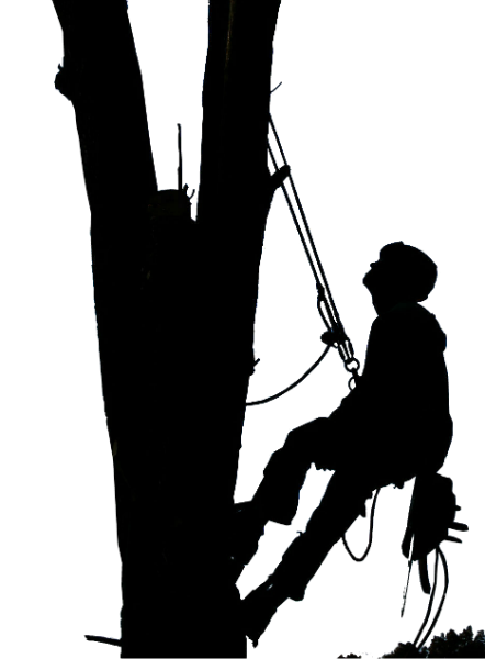 Tree Climber Silhouette at GetDrawings.com.