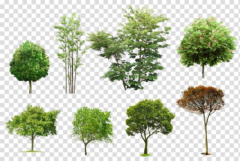 Eight assorted trees, Arboles y arbustos Architecture Tree.