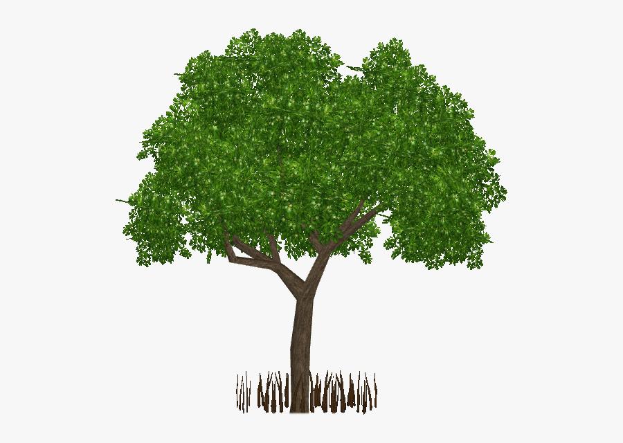Transparent Mangrove Tree Png.