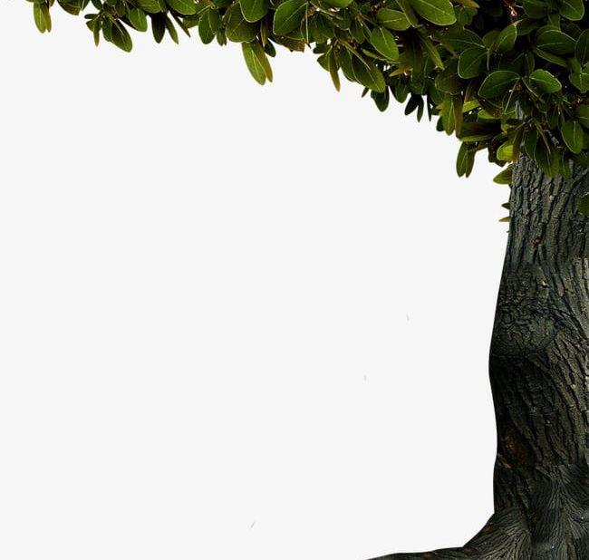 Tree Decoration Border PNG, Clipart, Border, Border Clipart.