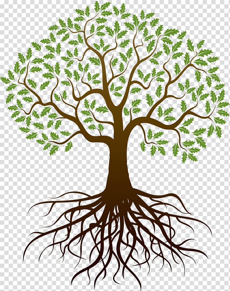 Tree of life illustration, Drawing Tree Root, reunion.