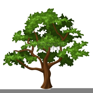 Oak Tree Clipart.