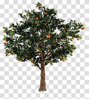 Cut Fruit transparent background PNG cliparts free download.
