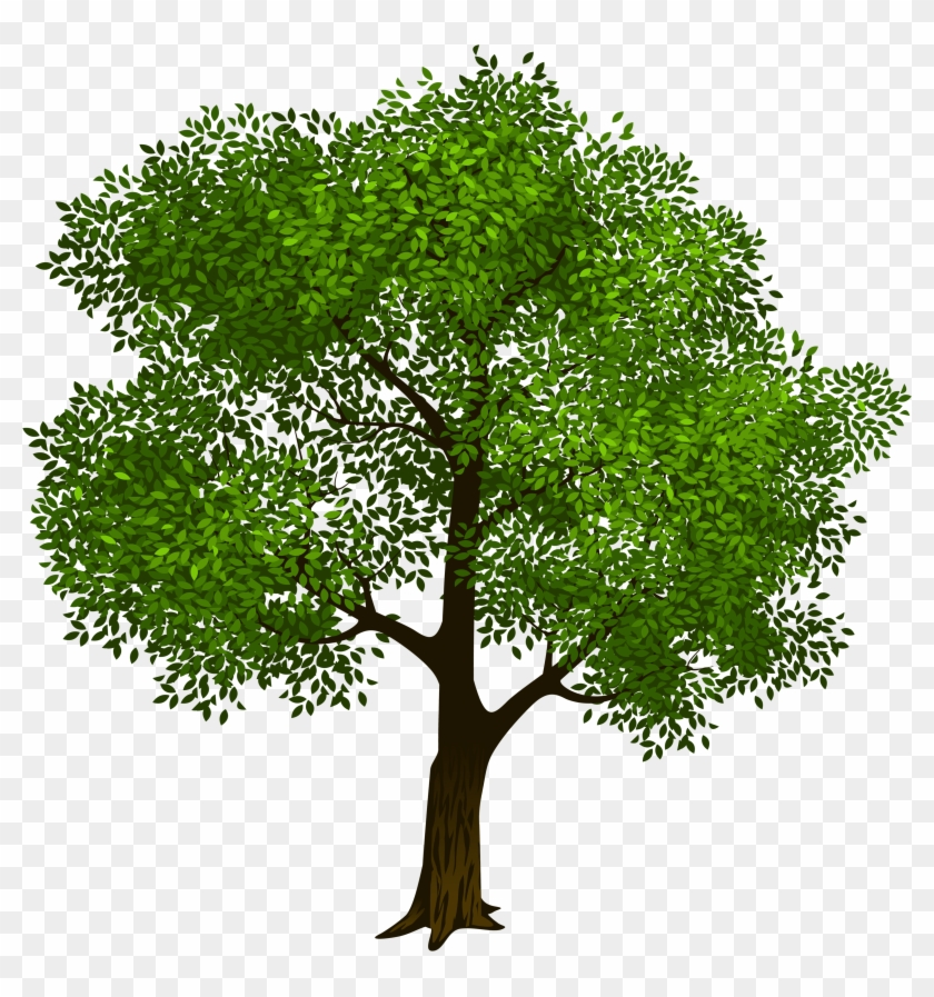 Transparent Green Tree Clipart Picture M=1423128566.