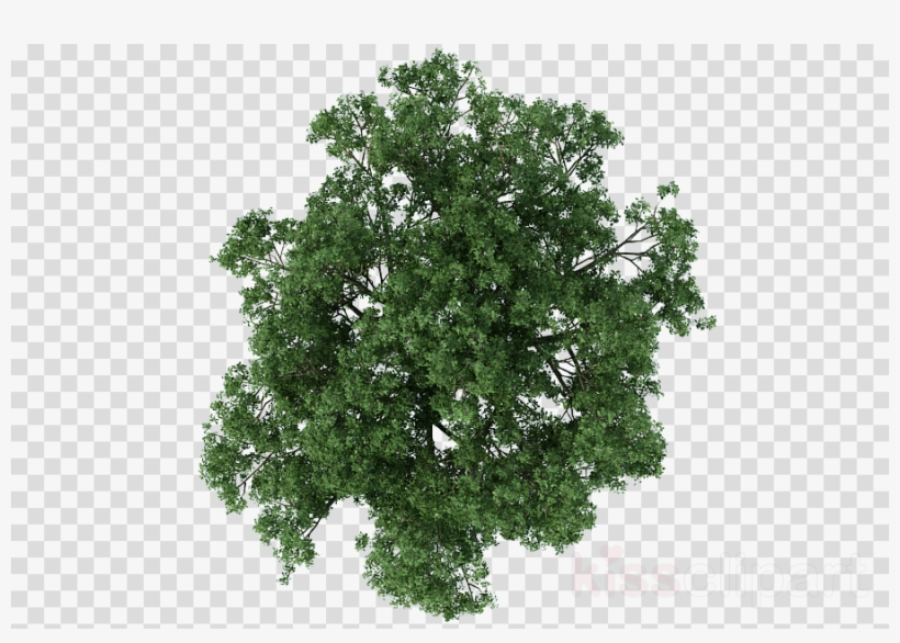 Tree Plan Png Clipart Architecture.