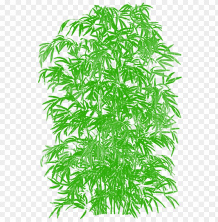 bamboo vector clipart cartoon tree, tree png plan,.