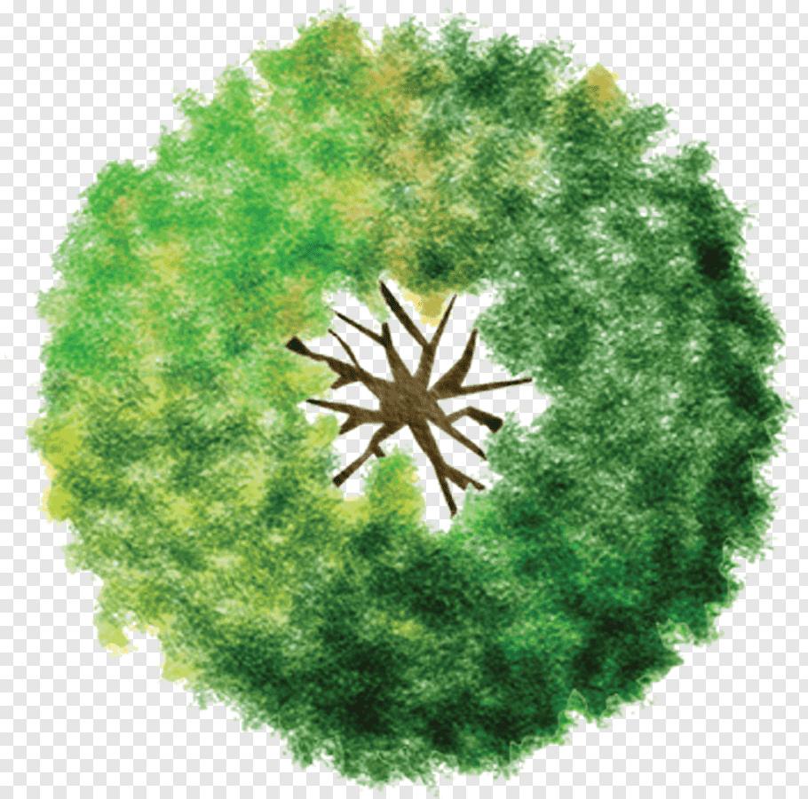 Green tree illustration, Landscape architecture.