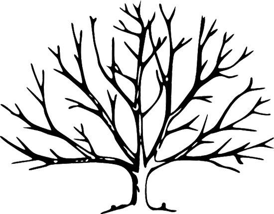 Printable Tree without Leaves Coloring Page.